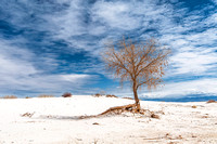 White Sands National Monument, New Mexico 4387