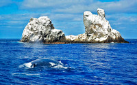 Roca Partida, with Humpback Whale 5203