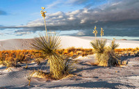 White Sands National Monument, New Mexico 4330