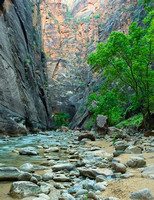 Zion Narrows, Virgin River 9153