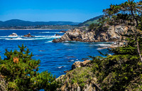 Point Lobos State Natural Reserve 00098