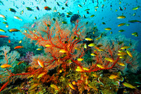 Raja Ampat, Indonesia - greatest coral reef biodiversity in the world - May 05 & Oct 07