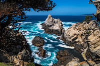 Point Lobos State Natural Reserve 00135
